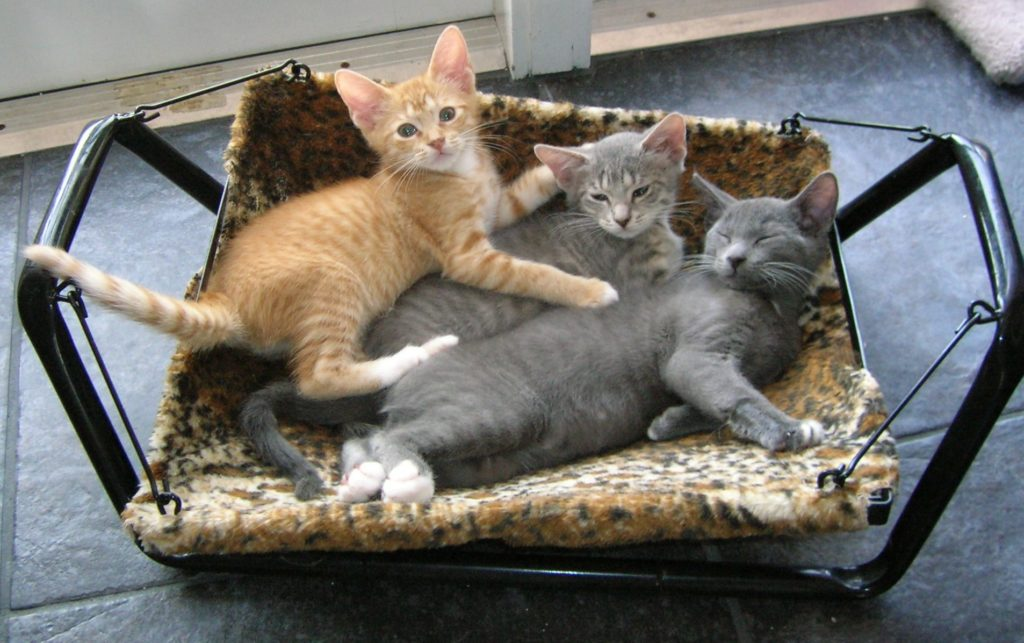 Three kittens in cat bed