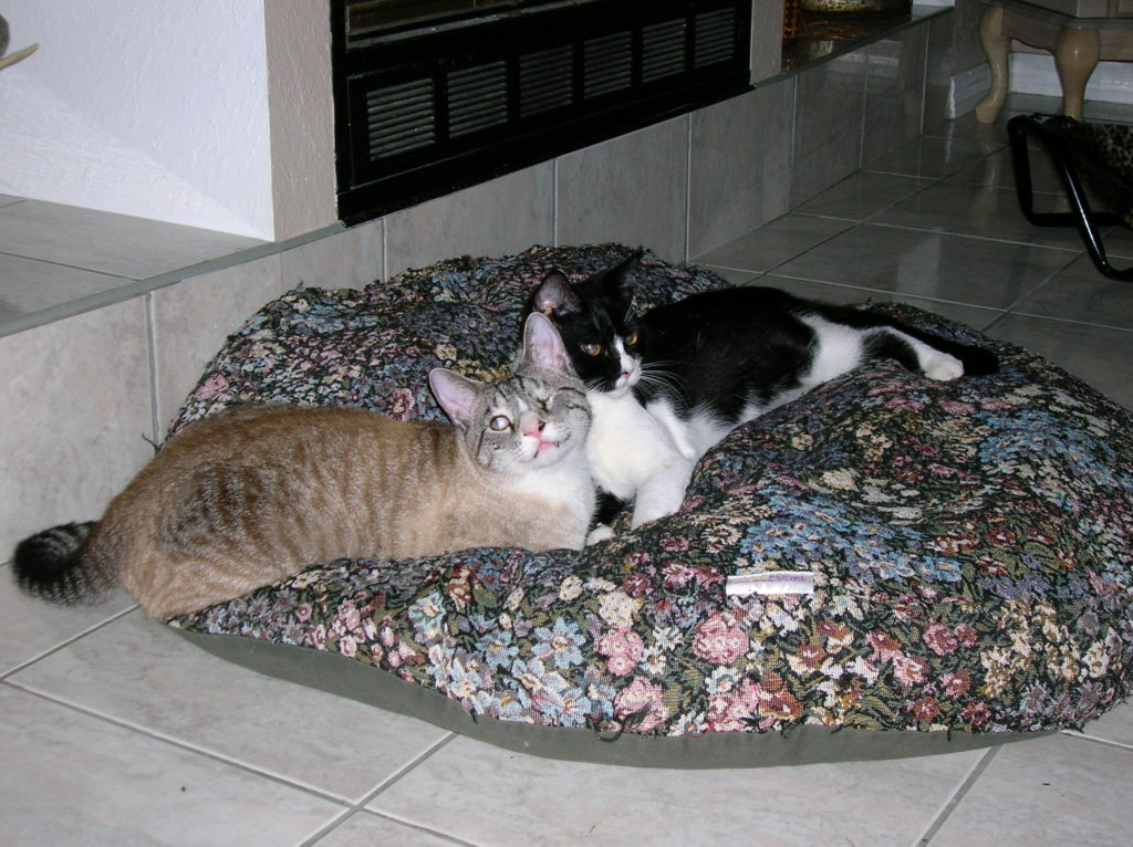 two cats on pet pillow